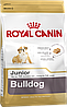Royal Canin Bulldog Juniot 12 кг - Корм для щенков Английского бульдога до 12 мес