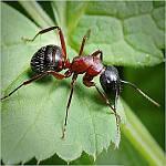 Средства от бытовых и садовых насекомых