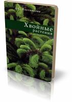 Хвойные растения. Лилиан Плотникова