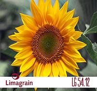 Подсолнечник Limagrain LG 5412 Раннеспелый  2015 г.