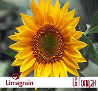 Подсолнечник Limagrain LG Голдсан Среднеранний  2016 г.