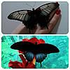 Живая тропическая бабочка Papilio lowi.