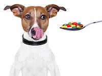 Витамины и препараты для собак