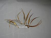 Золотые узкие листья (1уп-5шт),h-15см