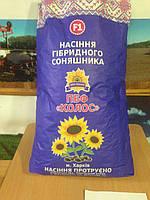 Семена подсолнечника французской селекции (Под Гранстар) - ЭКСТРА