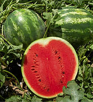 Ау Продюсер F1 ранний гибрид арбуза с большими овальными плодами и высоким содержанием сахара весом 12 кг