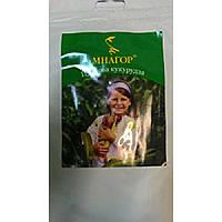 Сладкая кукуруза Багратион F1, 74-78 дней, Содержание сахара -12%. Упаковка 50 семян на площадь 8м2