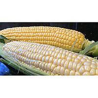 Семена суперсладкой сладкой кукурузы МАЛИБУ, сахара 24% , ФАО 240-260, 78-80 дней. На 1,5 га