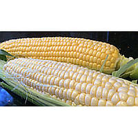 Семена суперсладкой сладкой кукурузы МАЛИБУ, сахара 24% , ФАО 240-260, 78-80 дней. На 30 соток