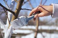 """Краска для защиты садовых деревьев от зайцев и грызунов """"Белый Ствол"""""""