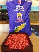 Гибрид кукурузы Оржица 237 МВ F-1