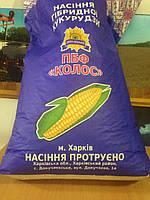Гибрид кукурузы Днепровский 181 СВ F-1