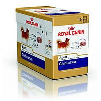 Упаковка Royal Canin Chihuahua Adult - Влажный корм для собак породы Чихуахуа, 85г
