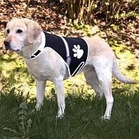 Trixie Жилет безопасности для собак,светящийся, L
