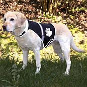 Trixie Жилет безопасности для собак,светящийся, М