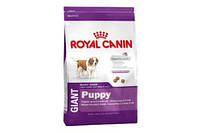 Корм Royal Canin Gigant Puppy