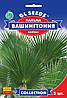 Пальма веерная Вашингтония робуста 5 шт