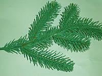 Веточка елки зеленая