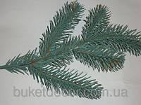 Веточка елки голубая