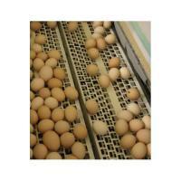 Система сбора яиц, яйцесбор, б/у сбор яиц