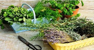 Пряно-смакові та лікарські трави