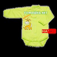 Детский боди с длинным  рукавом р. 68 с начесом ткань ФУТЕР (байка) 100% хлопок ТМ Алекс 3188 Зеленый2
