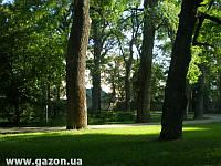 Теневой (парковый) газон