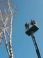 Спиливание деревьев, обрезка веток, спил дерева