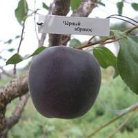 Черный абрикос, Чёрный принц