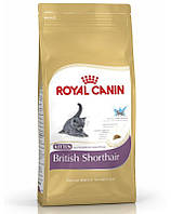 ROYAL CANIN Kitten british shorthair 10 kg