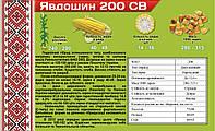 Семена кукурузы Явдошин 200 св. Двойной гибрид кукурузы