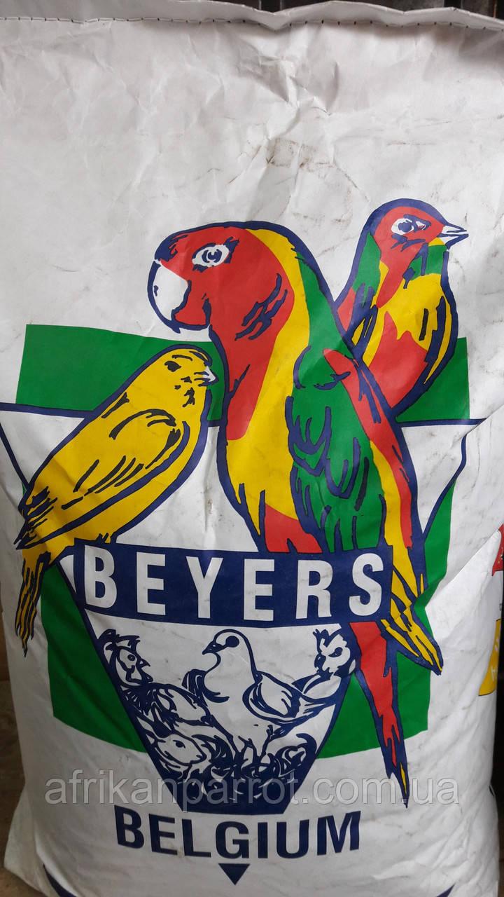 Нуг абиссинский - 1 кг.( Beyers Belgium-20 Кг)
