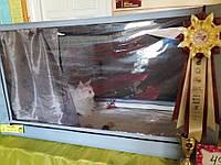 Прозрачный силикон для пошива домиков для котов и других животных
