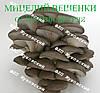 Купить мицелий вешенки в Николаеве, купити міцелій гливи в Миколаєві