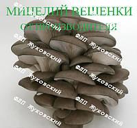 Купить мицелий вешенки в Украине, купити міцелій гливи в Україні