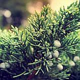 Масло можжевельника ягоды, фото 3