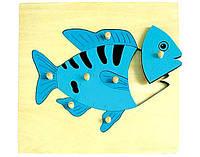 """Деревянная рамка-вкладыш """"Рыбка"""" для детей от 1 года ТМ """"Игрушки из дерева"""" Р 89"""