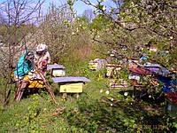 Зоя и Анатолий делают весенний осмотр пчелосемей.