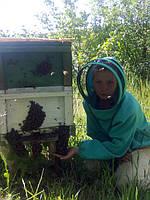 """Вероника держит в руке """"пчелиную бороду"""". Если лето очень жаркое, то часть пчел вылазят на прилетную доску и корпус."""