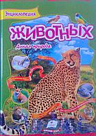 Энциклопедия животных. Дикая природа 79547 Пегас Украина