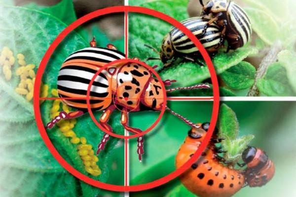 Инсектициды (защита от вредителей)