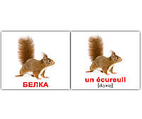 "Карточки мини русско-французские ""Дикие жив./Les animaux sauvages"" 20 карт., в пак. 10*9см(096570)"