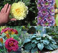 Оптовый прайс корни цветов и многолетников весна 2017