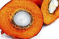 Пальмоядровое масло, фото 1
