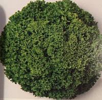 Насіння салату Ілема (ILEMA) Лолло Біонда 5 000 нас. (насіння дражоване) Enza Zaden