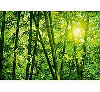 Фотообои W&G 00123 Бамбуковий лес 366*254
