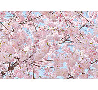 Фотообои W&G 00155 Розовые цветы 366*254