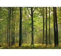 Фотообои W&G 00216 Осенний лес 366*254