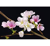 Фотообои W&G 00627 Цветы вишни 115*175