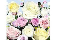 Фотообои Prestige №15 Розы 294*272